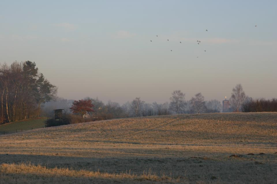 Wohltorfer Kirche hinter den Feldern